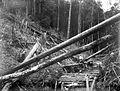 COLLECTIE TROPENMUSEUM Gekapt bos voor de hydraulische buisleiding Singkep Tin Maatschappij Riouw TMnr 10007332.jpg