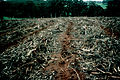 CSIRO ScienceImage 643 Residue Treatment of Plantation Harvest.jpg