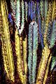 Cactus (8312180445).jpg