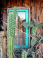 Cactus and Window7-2012 (7502185156).jpg