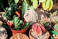 Cactus in Hamden.jpg