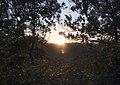 Cae el sol entre los árboles (45034970432).jpg