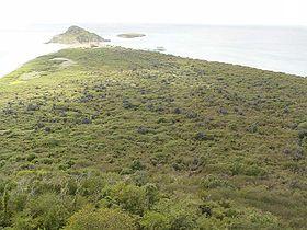 Vista de la selva de la isla Caja del Muerto (Puerto Rico)