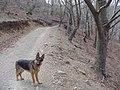 Camí cap a Sant Degimon, sota Matagalls (març 2007) - panoramio.jpg