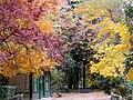 Campo Grande en otoño (Valladolid).jpg