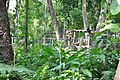 Can you spot the bear in the enclosure at the far end? (14418951939).jpg