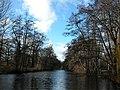 Canal Plantation, Bushy Park - geograph.org.uk - 21269.jpg