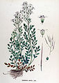 Cardamine amara — Flora Batava — Volume v17.jpg