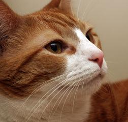 A cat as a stockpicker?