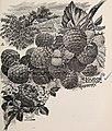 Catalogue of the Orange County Nurseries (1895) (20396789409).jpg