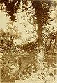 Catalogue raisonné des l'epidoptres des Alpes-Maritimes. et notes entomologiques diverses (1886) (20397760740).jpg