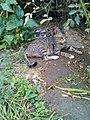 Cats in the Garden 3.jpg