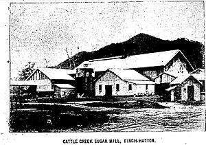 Finch Hatton, Queensland - Cattle Creek Sugar Mill, 1913