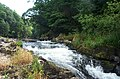 Cenarth Falls - geograph.org.uk - 13728.jpg
