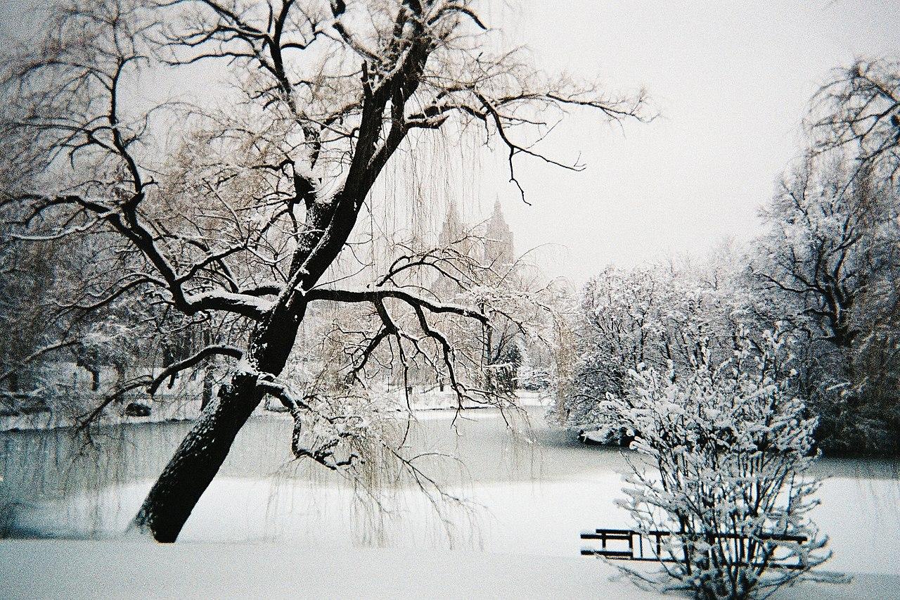 Snow New York City Shoveling Jobs