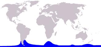 Hourglass dolphin - Image: Cetacea range map Hourglass Dolphin