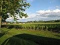 Château Bouscaut vineyard, Cadaujac, Aquitaine, France - panoramio.jpg