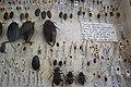 Charles Darwin's beetle box - 5.jpg