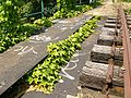 Chemin de fer de Petite Ceinture - nature.jpg