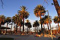 Chepica, palmeras en plaza.jpg