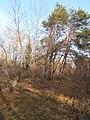 Cherkas'kyi district, Cherkas'ka oblast, Ukraine - panoramio (1151).jpg