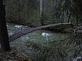 Chilkoot Bridge at Canyon City.jpg