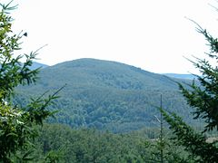 Cholomondas Mountain, Chalkidiki, Greece - Dense forest.jpg