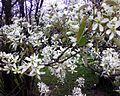 Christchurch botanical gardens - 2.jpeg