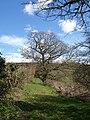 Chudleigh Bridleway 3 - geograph.org.uk - 749293.jpg