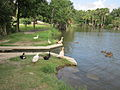 City Park NOLA 4 July 2010 Duck Canal.JPG