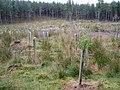 Claggersnich Wood - geograph.org.uk - 1477972.jpg