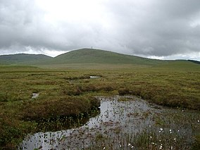 Small lochans on the accessible area of the Forsinard reserve