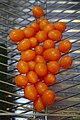 Cleaning Tomatos (117412743).jpeg