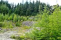 Clearing in the forest - geograph.org.uk - 1442170.jpg