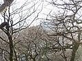 Coed Glan Bala Woodland - geograph.org.uk - 306472.jpg