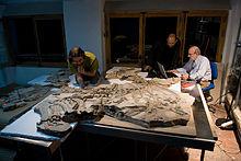 Come la datazione radiometrica aiuta gli scienziati a individuare letà di un fossile (punti 3)