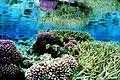 Coral gardens at Palmyra Atoll NWR (5123998788).jpg