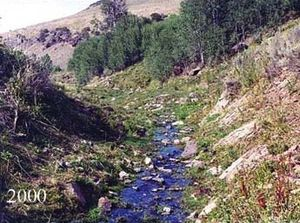 The same stream bank lined with short grasses, with more aspen trees in the background