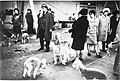 Crufts Dog Show 1968 (3084034375).jpg