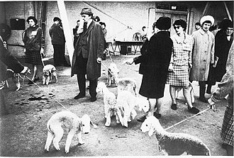"Street photography - ""Crufts Dog Show 1968"" by Tony Ray-Jones"