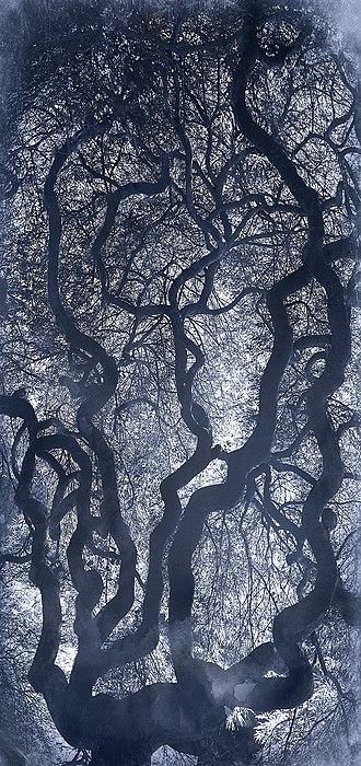 Kate Cordsen - Cyanotype, Indigo XII, 2014, 83 X 38 inches