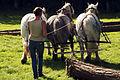 Débardage JEAN BAPTISTE RICARD mondial du cheval percheron 2011Cl J Weber04 (23456708623).jpg