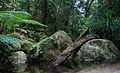 Daintree National Park.jpg