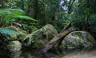 Daintree National Park - A typical rainforest scene in Daintree National Park