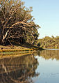 Darling River at Bourke.jpg
