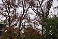 Daxi Presbyterian Church 大溪長老教會 - panoramio.jpg