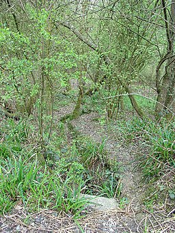 Deciduous Woodland, Southwater Country Park, Southwater, West Sussex - geograph.org.uk - 23834