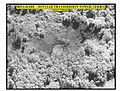 Defense.gov News Photo 990609-O-9999K-002.jpg