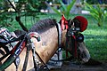 Delman Horse.jpg