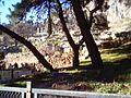 Delphi Ext.jpg